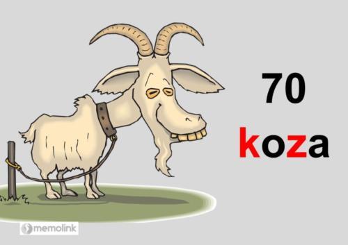 System główny karta 70 koza